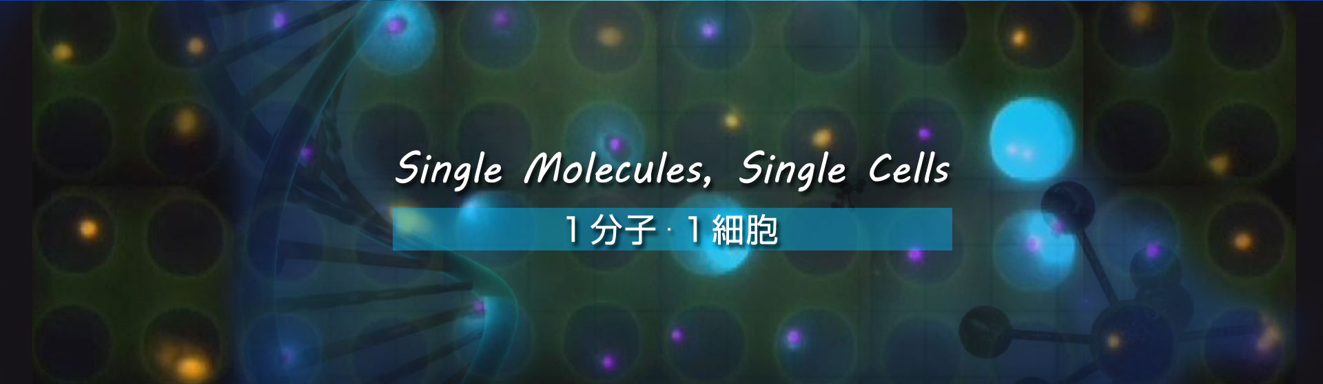 Single molecules, Single Cells 1分子・1細胞
